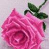 نخ و نقشه سایز 11 در 16 سانتی طرح گل رز صورتی