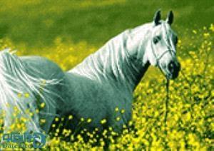 نخ و نقشه طرح اسب زیبا